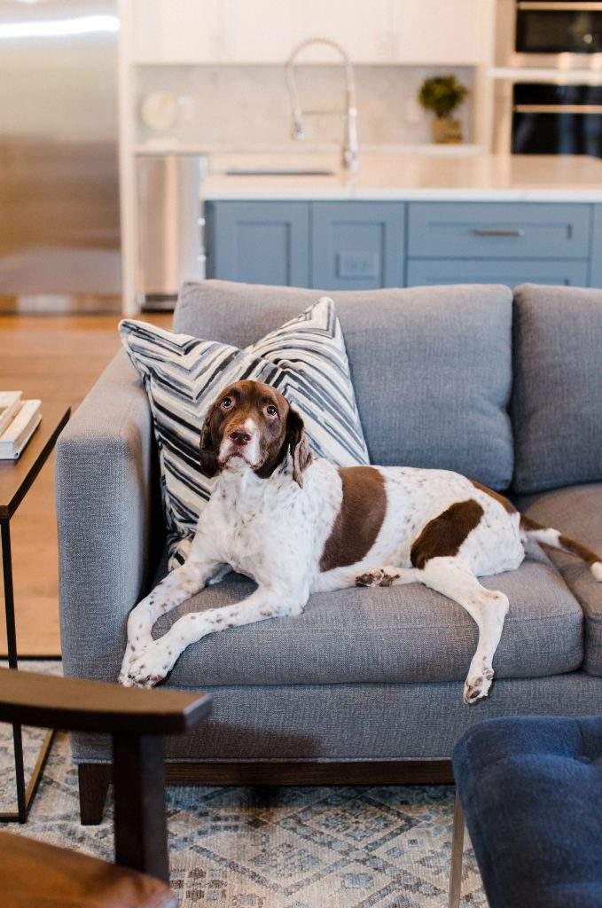Northwest Balcones - interior design austin | gray couch with bird dog | austin, texas