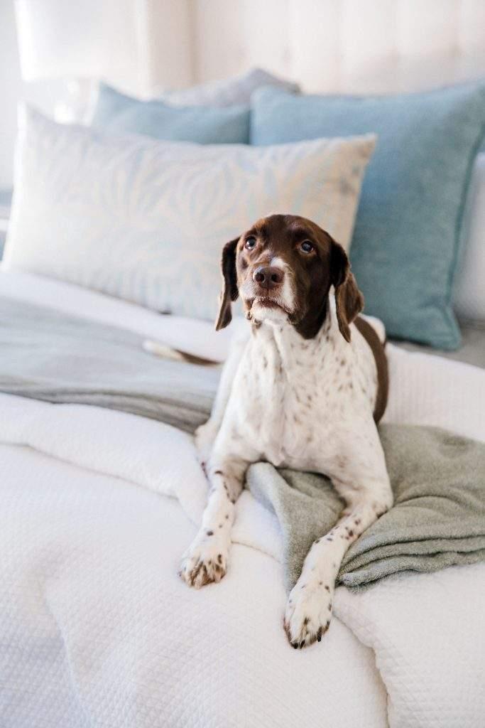 Northwest Balcones - interior design austin | bed with bird dog | austin, texas