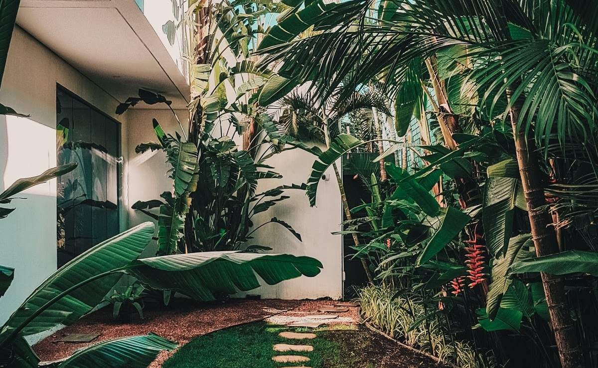 eco-friendly interior design   plants on exterior of building   austin, texas